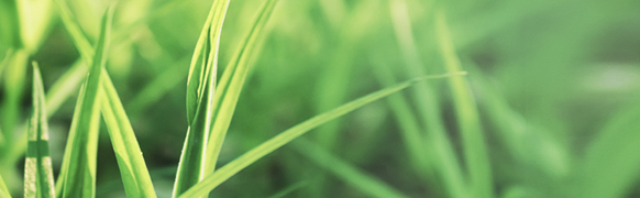 Beth_Teeters_Therapist_grass2
